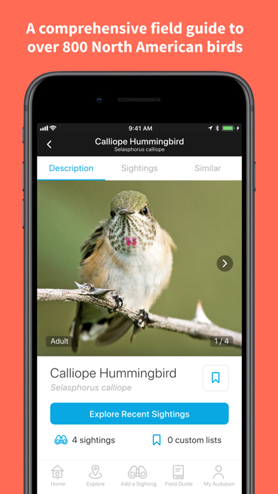 Audubon Bird Guide review screenshots