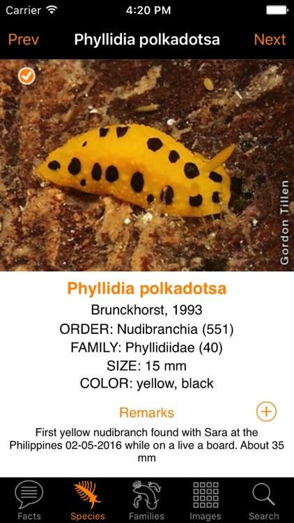 Nudibranch ID Indo Pacific screenshot-3
