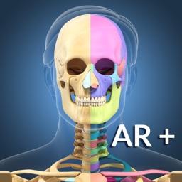 AR Skeleton Anatomy