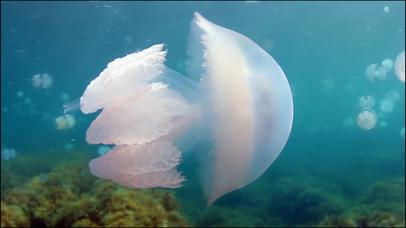 Video Touch - Sea Life screenshot 3