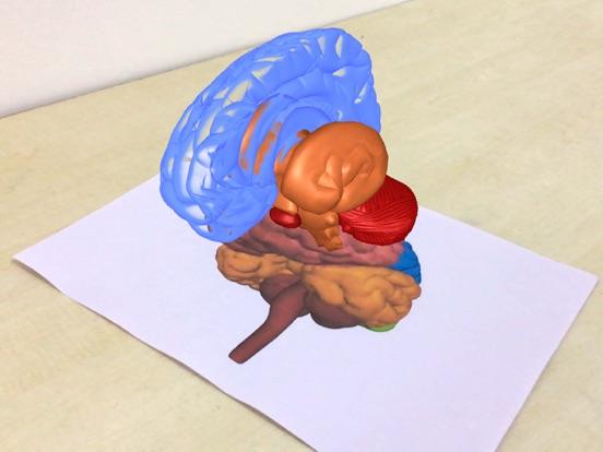 AR Human brain screenshot 12