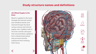 Anatomy & Physiology Free APK Download - IKONFOSTERING ORG