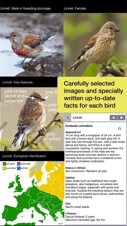 Birds of Britain Pro screenshot-3
