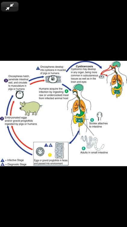Atlas of Pediatric ER Med, 3/E screenshot-7