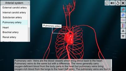 Vascular system screenshot 3