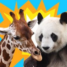 Activities of AnimalTower Wars