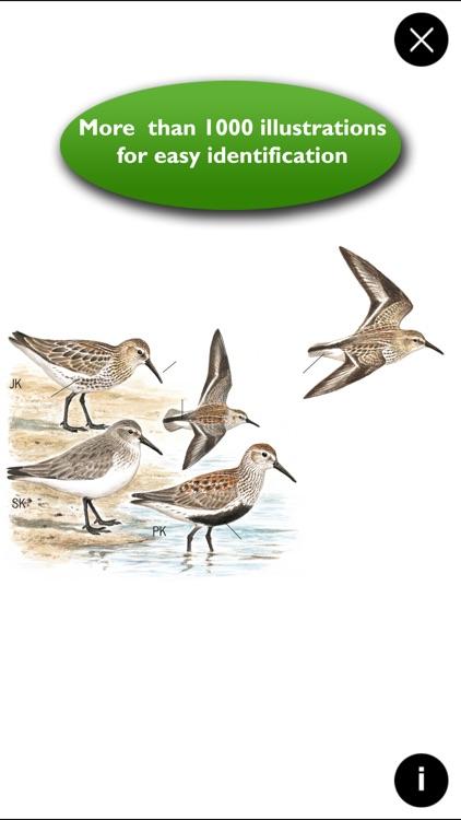 Birds of Europe Guide screenshot-4
