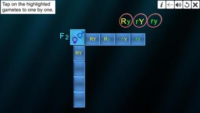 Dihybrid cross screenshot 6
