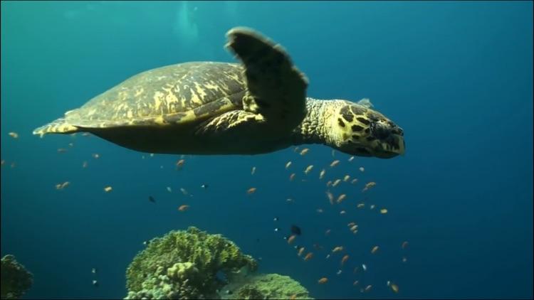 Video Touch - Sea Life screenshot-3