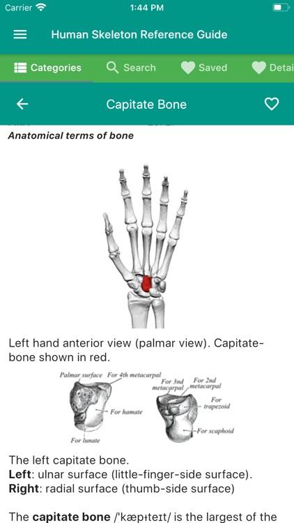 The Human Skeleton Manual Guide