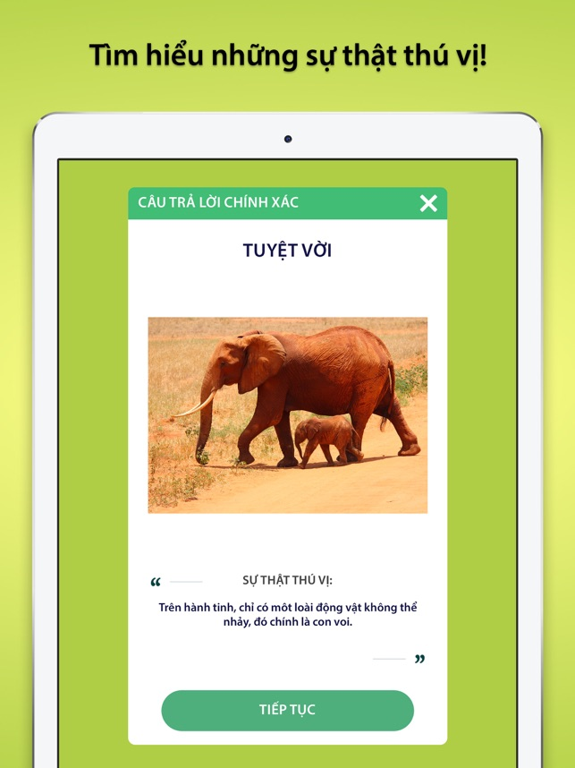 Trivia Quiz: Câu Hỏi Đố Vui