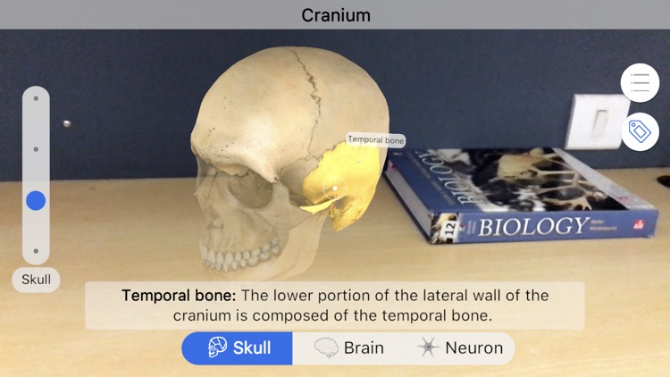 Brainapse