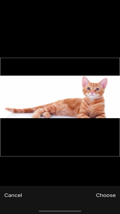 Cat Breeds - Identify your Cat screenshot-2