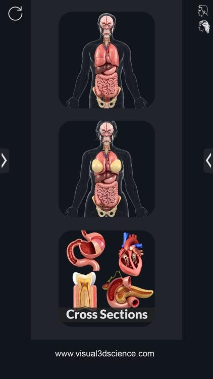 My Organs Anatomy