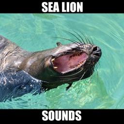 Sea Lion Sounds