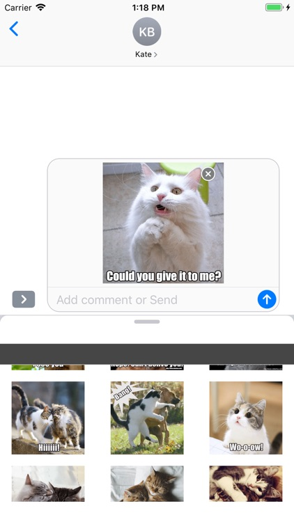 Funny Cats Animated Stickers screenshot-4