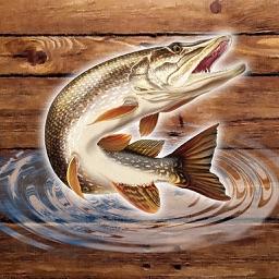 Fish Rain: Sport Fishing Games