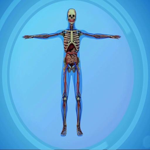Menschliche Körper Testfragen