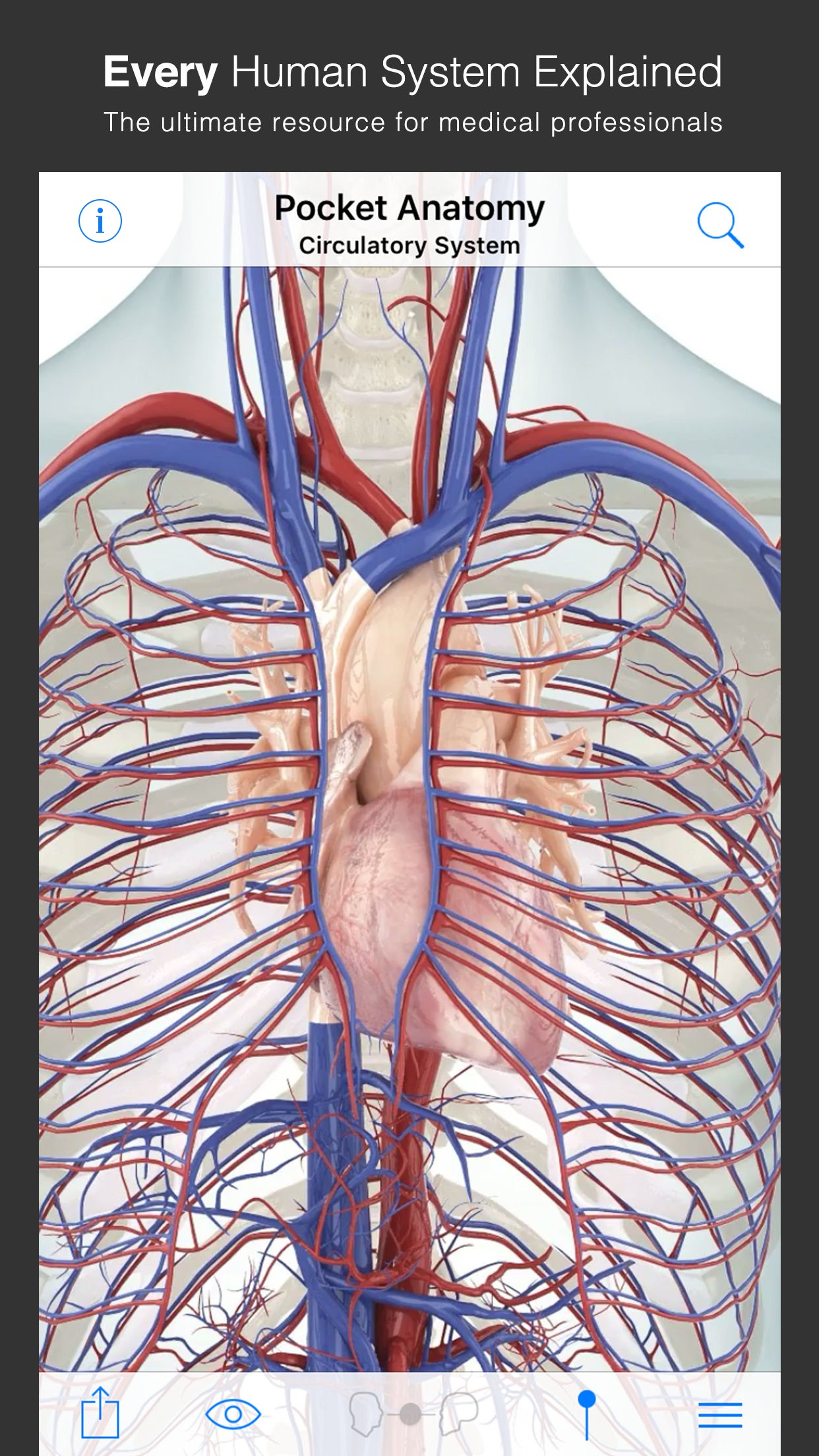 Screenshot do app Pocket Anatomy.