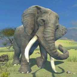 Clan Of Elephant