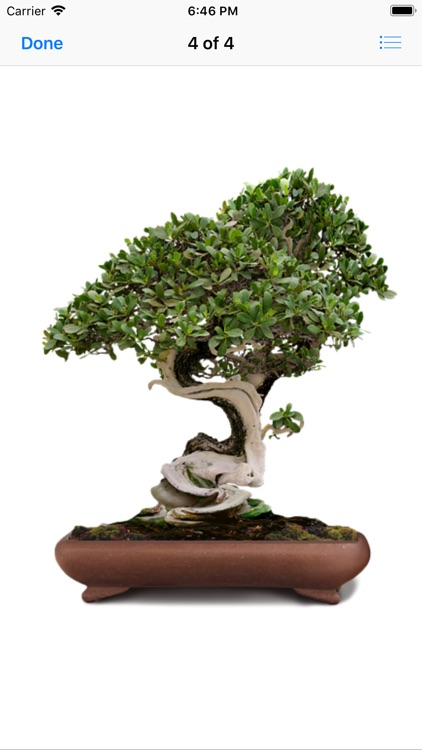 Beautiful Bonsai screenshot-4