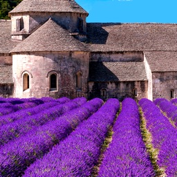 Provence's Best: Travel Guide