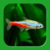 ミニアクア 癒しの熱帯魚育成と水草水槽、ア...