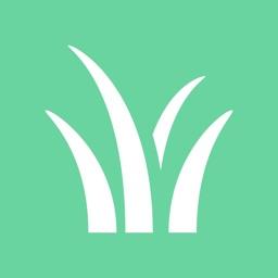 Idaho Grasses