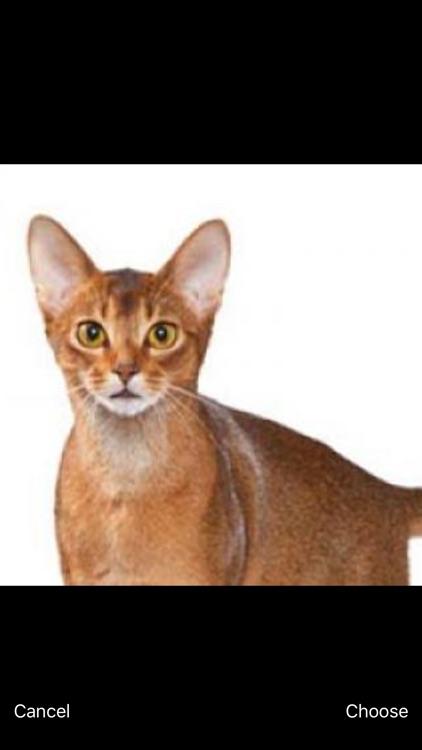 Cats Pedia: Breed identifier screenshot-4