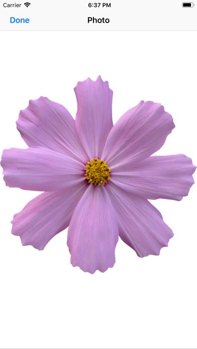 Have A Flower app image