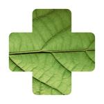 Identification Plante Malade pour pc