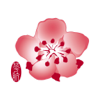 中華航空 App
