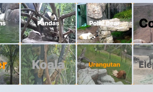 Animal Cams for TV