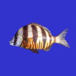 Marine Fish Guide