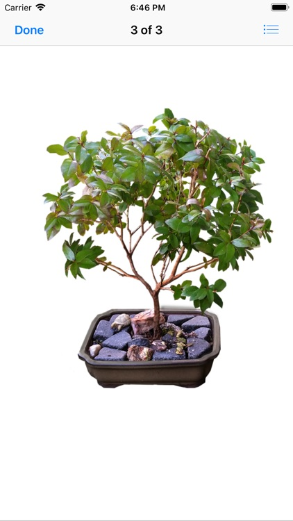 Beautiful Bonsai screenshot-3