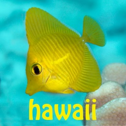 Snorkel Fish Hawaii for iPhone