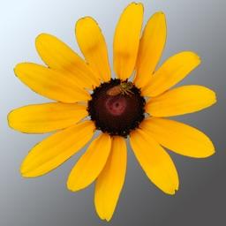 Maryland Wildflowers