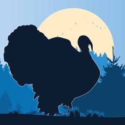 Wild Turkey Calls