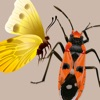 Key to Insect Orders - Revised - iPhoneアプリ