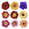 100+ Flower Stickers