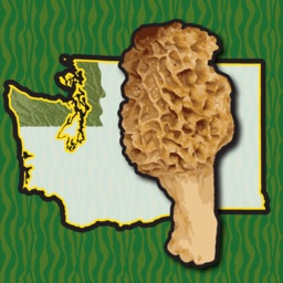 Washington NW Mushroom Forager