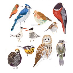 Common Birds Songs