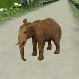 Zoo Escape - 3D Animal Runner