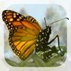 Brian Cox's Wonders of Life - iPadアプリ