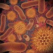 Infectious Disease Compendium app review