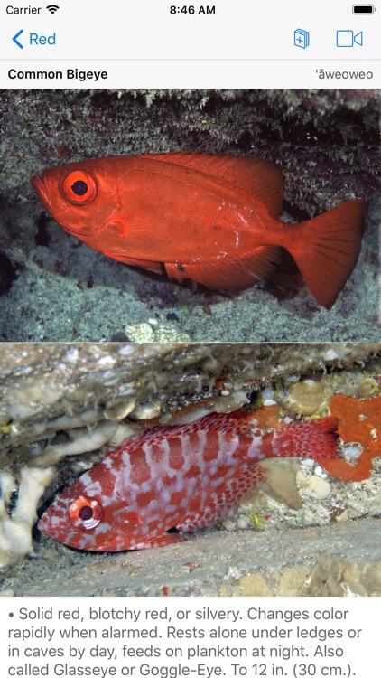 Snorkel Fish Hawaii for iPhone screenshot-3
