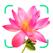 Flower plant identification!