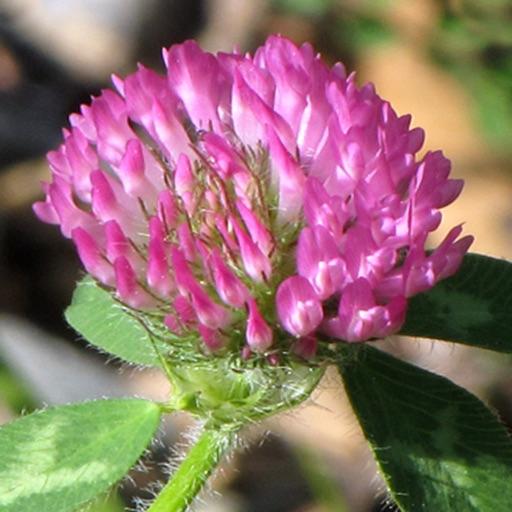 New England Wildflowers