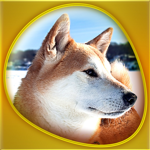 Animals 360 - Dogs Gold