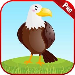 Birds Animal Sounds Kids Games